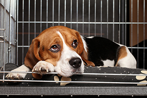 Reducing spread of deadly disease central to dog import bill