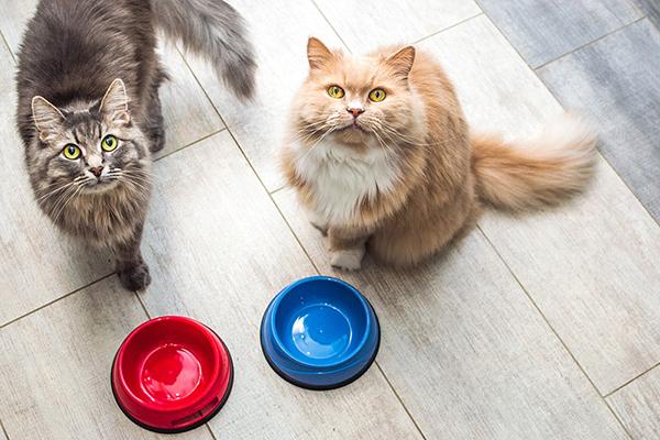 Cat deaths surge in U.K. amidst food recall