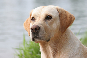 Fund matching campaign launched for National Dog Day