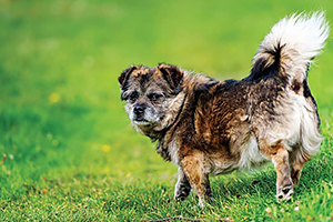 The pandemic's impact on veterinary medicine most sacred responsibility