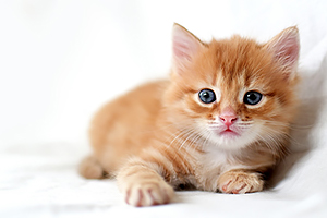 DNA may hold secret for feline HCM therapies