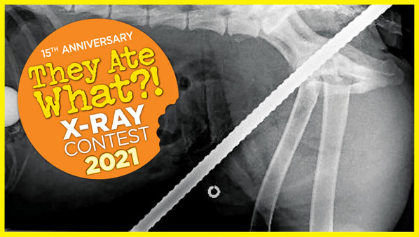 2021 They Ate What?! X-ray contest winners!