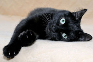 Deadly feline cancer sees new potential treatment