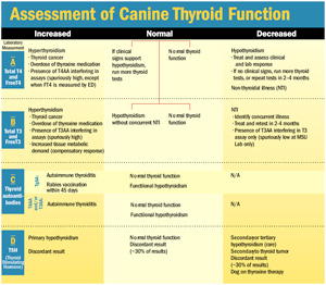 How To Test, Interpret Thyroid Function - Veterinary Practice News