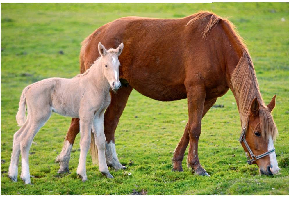 common illnesses of newborn foals veterinary practice news