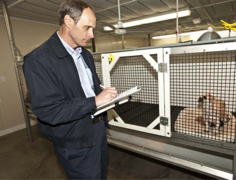 how much does a vet health certificate cost veterinary practice news