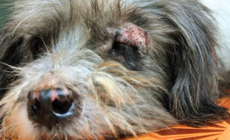 How To Tackle Pet Skin Disorders With