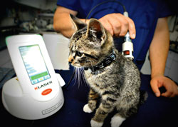 Is It Time To Invest In Class IV Laser Therapy? - Veterinary