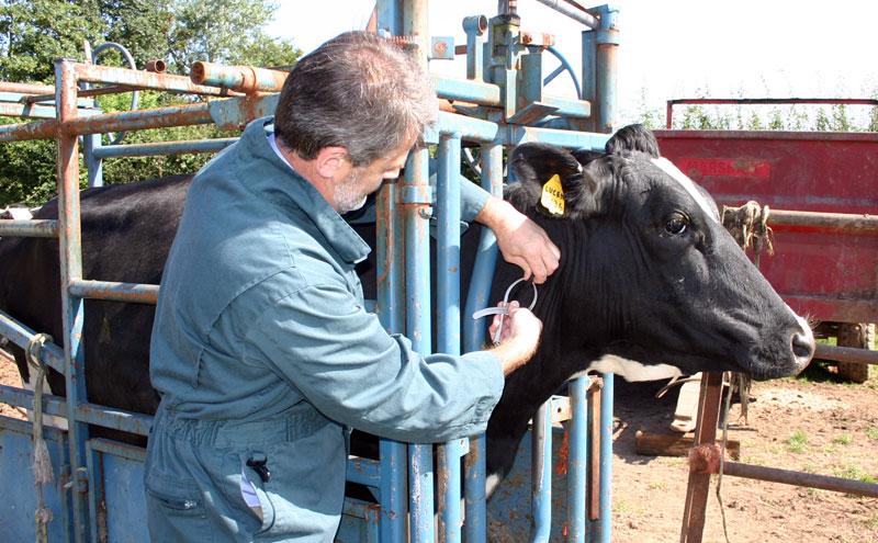Livestock Pose Giant Threat to British Vets - Veterinary
