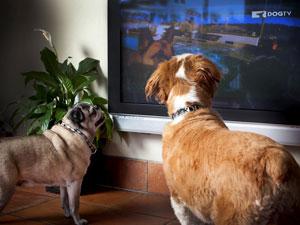 directv dog channel