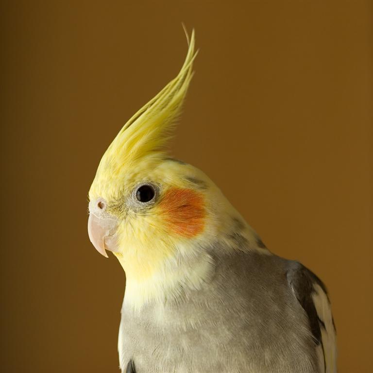 Psittacosis Concerns Suspend Bird Sales At Petsmart Stores