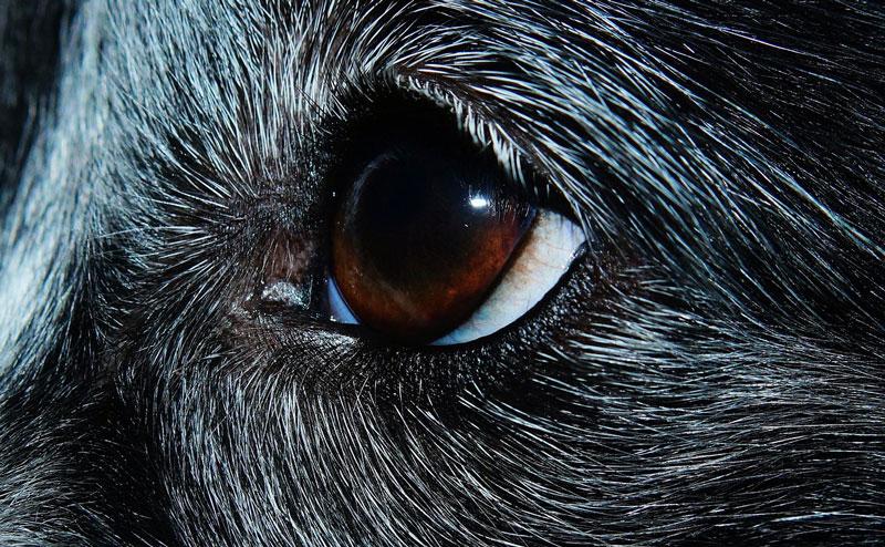dog-eye.jpg