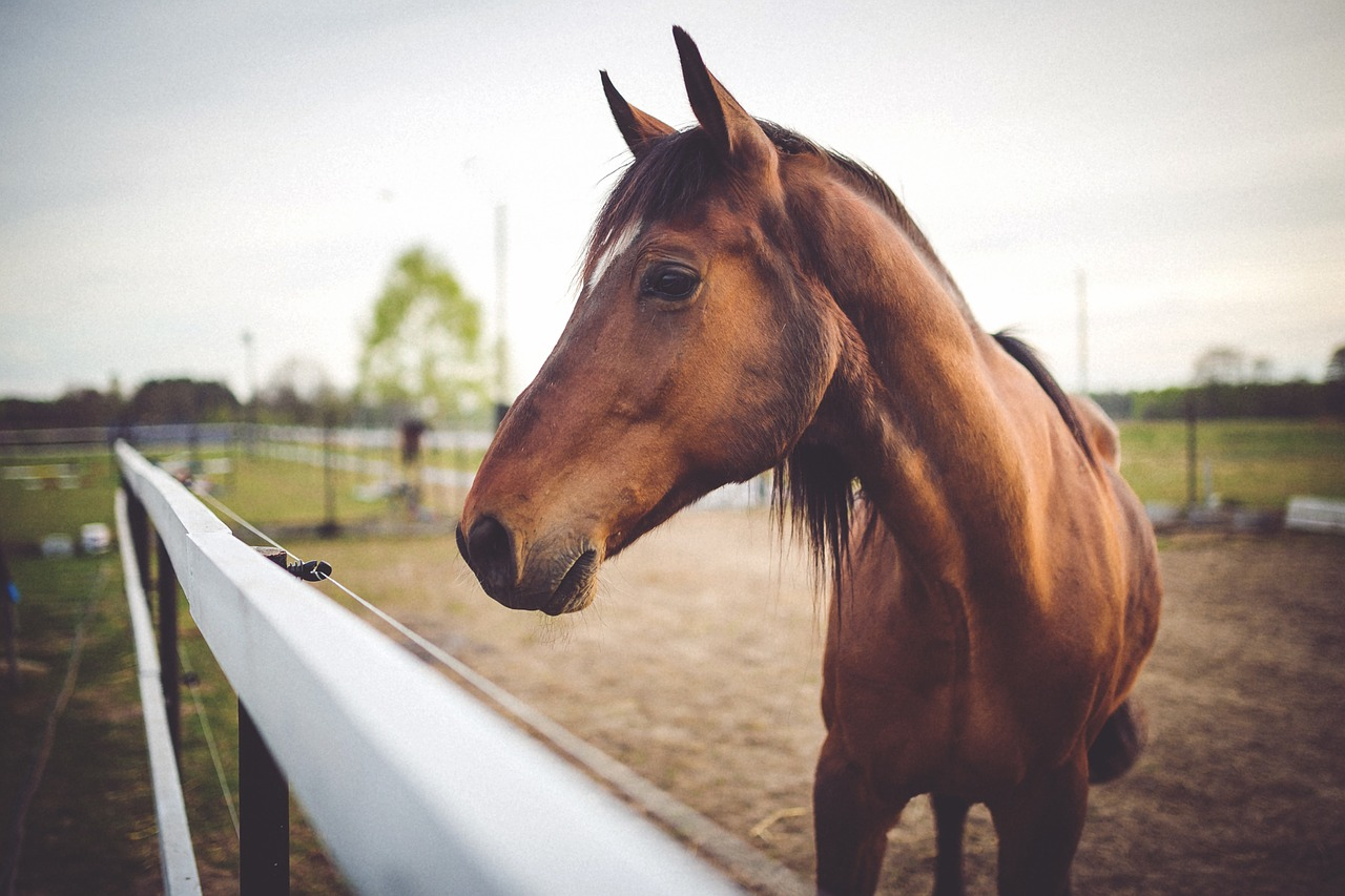 University of Florida Launches Equine Online Course - Veterinary ...