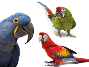 feds propose protecting four macaw species as endangered