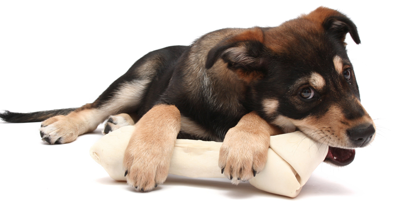 Selling Puppies Laws In Canada