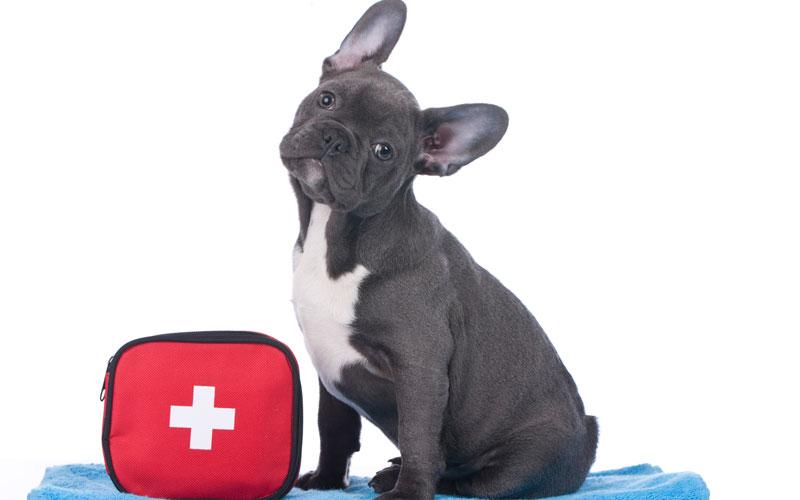 emergency dog clinic