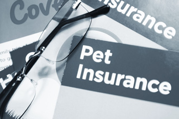 Do You Recommend Pet Insurance? - Veterinary Practice News