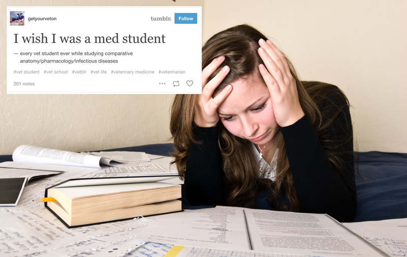 17 Times Tumblr Perfectly Captured Your Feelings About Vet School ...