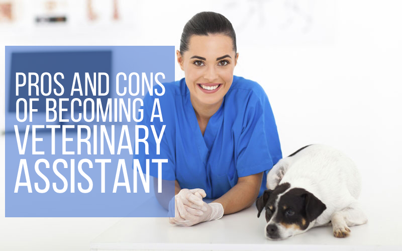 pros and cons of becoming a veterinary assistant - veterinary