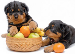 dogs with fruit