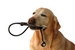 Dog Stethoscope