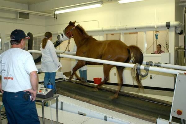 Horses at WSU can benefit from a high-speed treadmill for diagnosis of certain conditions. The treadmill also is used for research focusing on equine cardiopulmonary physiology.