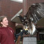 Amicus is a now full-grown golden eagle that came to WSU blind and unable to fly. He has been rehabilitated and now serves the college in outreach activities for schools and civic groups.