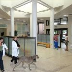 The new Veterinary Teaching Hospital opened in 1996. The entire lobby area is a piece of publicly supported artwork. The installation, called