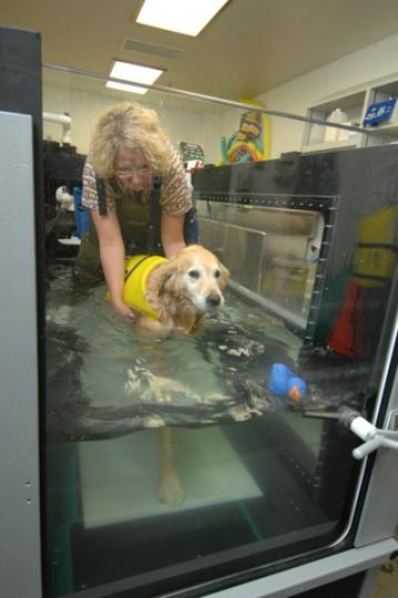 WSU's new underwater treadmill and its installation was a gift from donors to the college. The treadmill is used in physical therapy for partial weight-bearing exercise and weight control.