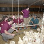 Dr. Tim Cummings and veterinary students at a poultry production unit.
