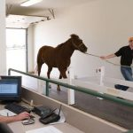The force plate, located at the Equine Research Park, is used for lameness studies.