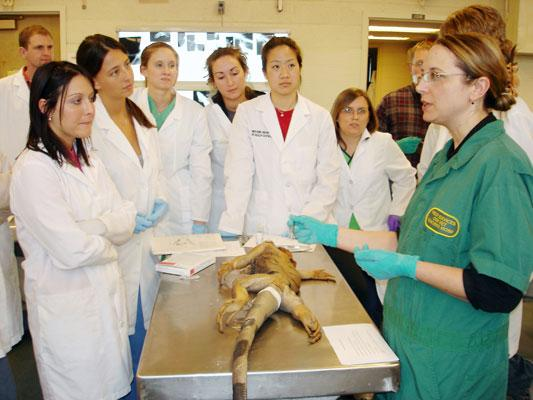 Dr. Lara Maxwell explains the gross anatomy of the Green Iguana and surgical approaches.