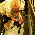 Topaz, a 13-year-old cat, goes for a swim as treatment for his osteoarthritis.