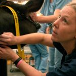Beth Basar learns to work with large animals at a practicum for Purdue University's Veterinary Technology Distance Learning program. Basar was the first vet tech to complete the program, which combines online classes with campus workshops.