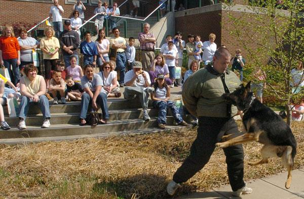 A crowd watches as Dag, a 3-year-old K-9 German shepherd, performs a mock attack on Sgt. Scott Hodson of the Tippecanoe County, Ind., Sheriff's Department. The demonstration was part of the School of Veterinary Medicine Open House.