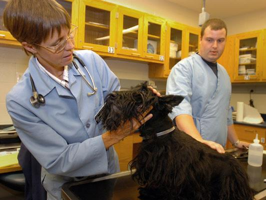 Purdue veterinary oncologist Debbie Knapp, DVM, MS, Dipl. ACVIM, examines a 12yr-old Scottish terrier at the School of Veterinary Medicine's Small Animal Hospital. Assisting her is Brent Herzberg, a pre-veterinary student who volunteered with oncology serv