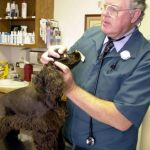 John C. Pickett, DVM, a graduate of Purdue's Veterinary Management Institute, works with a patient at the Lafayette, Ind., Veterinary Hospital. The Veterinary Management Institute is a series of 3-day, graduate-level classes.