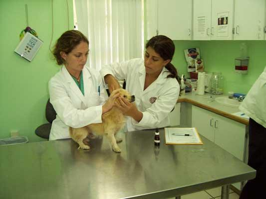 Caring for a dog in St. George's University's small animal clinic.
