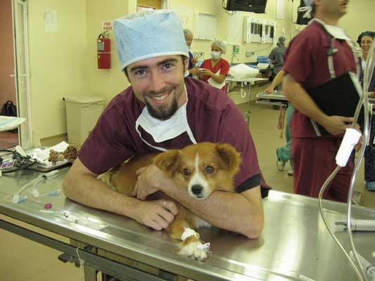 A St. George's veterinary students gets hands-on experience with a canine patient.