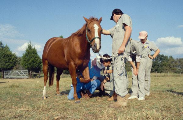 Dr. Martin instructs veterinary medical students in diagnostic examination of a horse's leg.