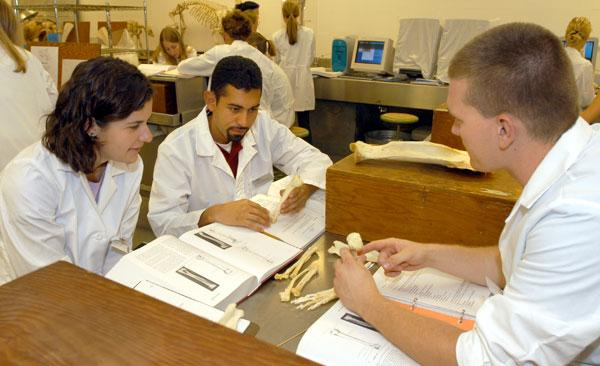 Students review specimens in anatomy lab.