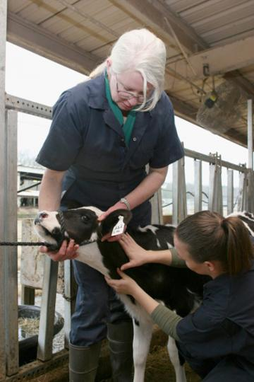 The University of Georgia College of Veterinary Medicine has partnered with UGA's College of Agricultural and Environmental Sciences to institute the Food Animal Veterinary Incentive Program, an early admission program for Georgia high school students.