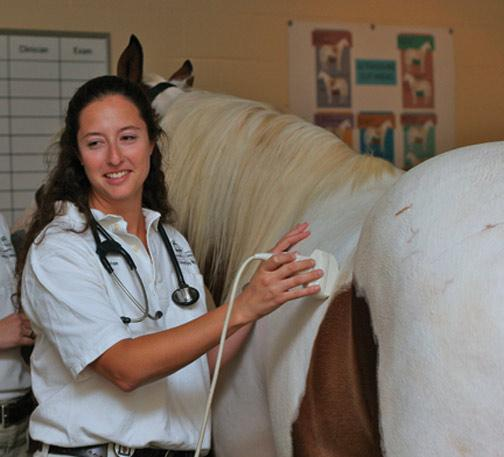 The University of Georgia College of Veterinary Medicine is well-known for its groundbreaking research and treatment of colic and laminitis in horses.