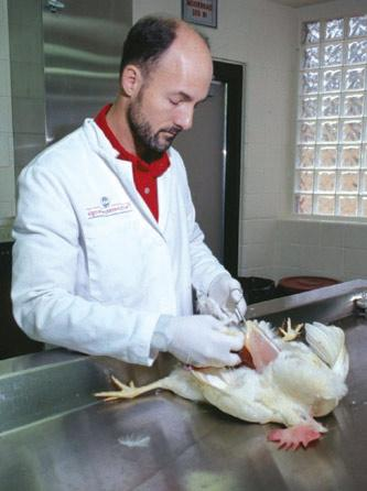 The College of Veterinary Medicine's Poultry Diagnostic and Research Center, which recently celebrated its 50th anniversary, provides diagnostic and consultative services to the commercial poultry industry throughout the world.