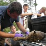 The Southeastern Cooperative Wildlife Disease Study (SCWDS) conducts research on diseases that affect wildlife animals and can be transferred to humans.