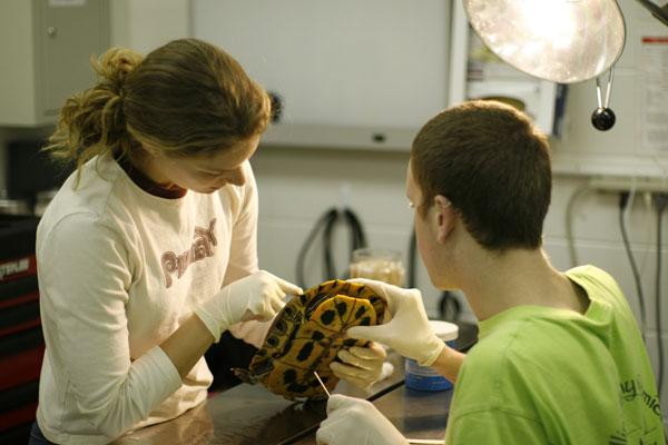 Student volunteers in the Wildlife Medical Clinic actively diagnose and treat injured wild animals.