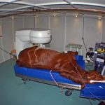 The veterinary College can image the neck, brain and lower extremities of horses and other large animals with an MRI.
