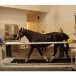 The University of Minnesota Equine Center offers clinical services, provides veterinary training and conducts groundbreaking research on horses.