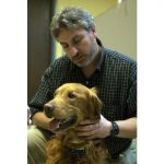 Minnesota's Animal Cancer Care & Research program is directed by Jaime Modiano,VMD,Ph.D., who holds the Perlman Chair in Animal Oncology. Dr. Modiano, part of a team leading a new project to find out why golden retrievers are susceptible to certain cancers