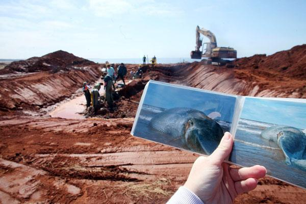 College faculty, staff and students prepare for the excavation of a blue whale buried 20 years ago on the coast of Prince Edward Island.